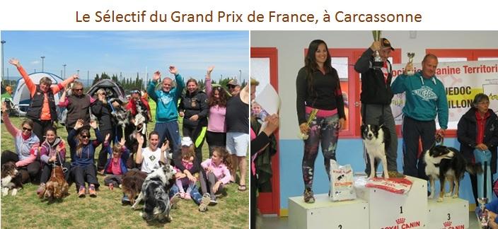 club canin carcassonne